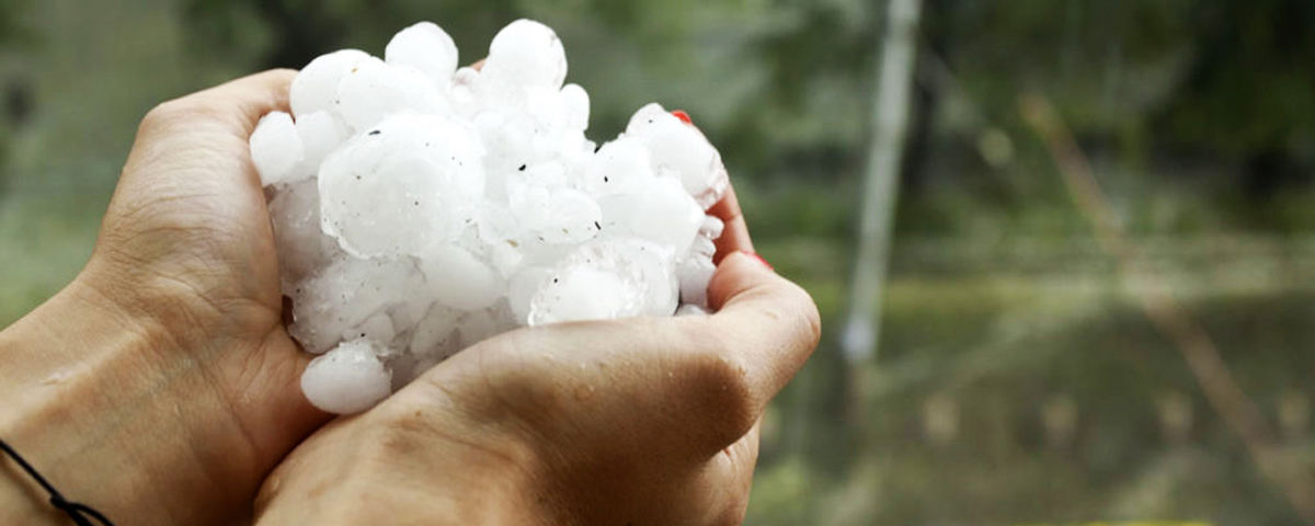 A hand holding baseball sized pieces of hail.